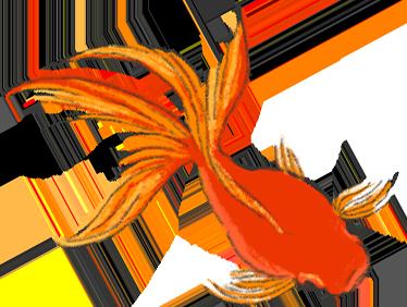 赤いきれいな金魚