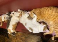【谷中銀座】パスタが美味しい!猫がいる「宿木カフェ&レストラン」で休日は心の癒しを。