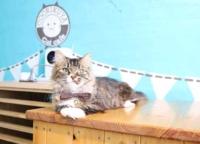 猫カフェも併設!浅草のペットショップ「COO&RIKU(クーアンドリク)」で可愛い猫や犬を見つけよう!