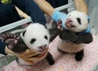 まだの人は急いで!上野動物園双子の赤ちゃんパンダの名前を2021年8月20日まで募集。シャンシャンの次は?