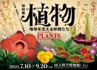 世界最大の花ラフレシアが実寸大模型で登場!国立科学博物館で見られるのは9月20日(月)まで